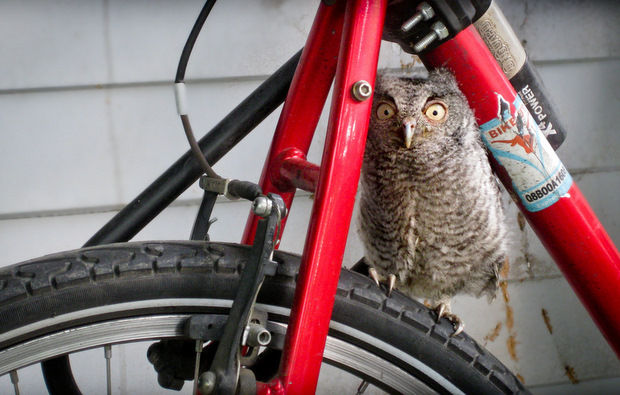 owl and bike